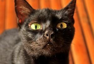 Lola Conching's Cat